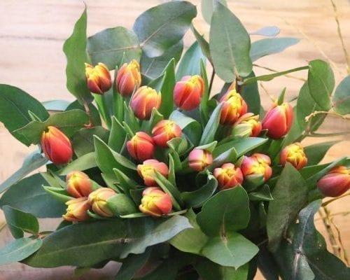 Bouquet de 20 tulipes oranges de l'Île-du-Prince-Édouard et Eucalyptus