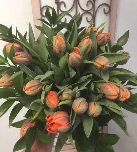 Tulipes Princesse Irène