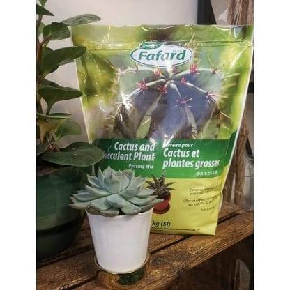 terreau fafard cactus et plantes grasses