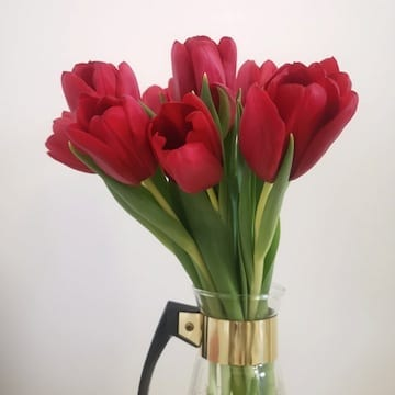 tulipes rouges, tulipes locales, tulipes, Tulipes rouges locales