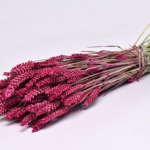 Bouquet-Triticum-Rose-ou-ble-70cm
