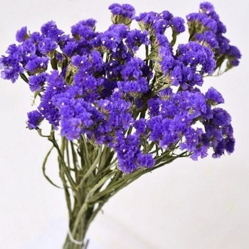 Statice Sinuata 45cm violet