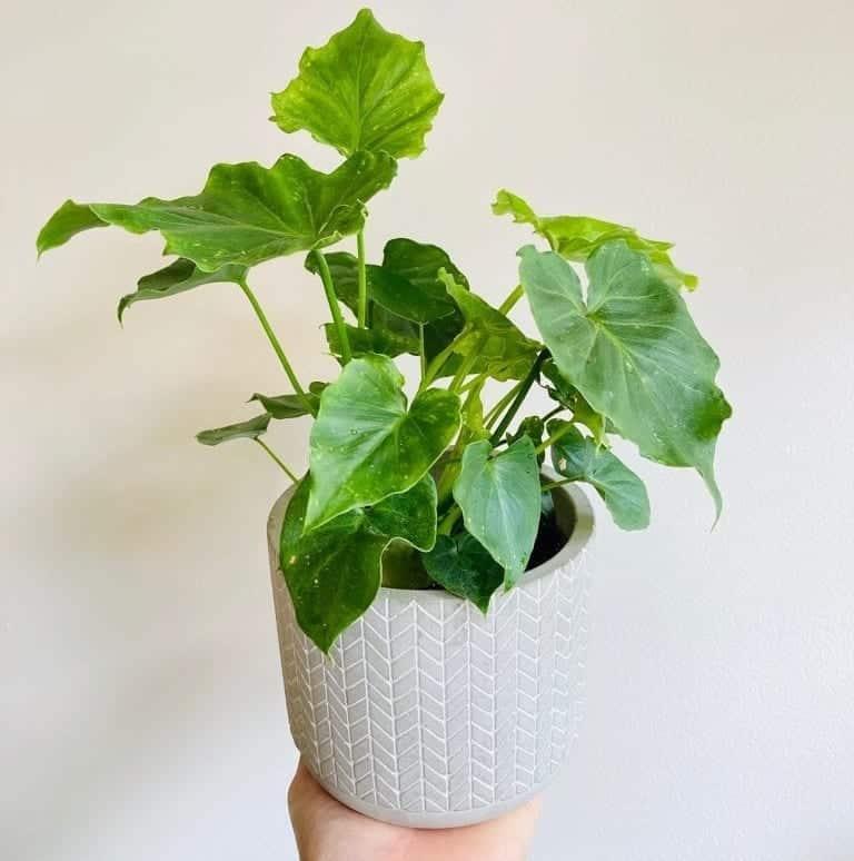 Image catégorie plantes