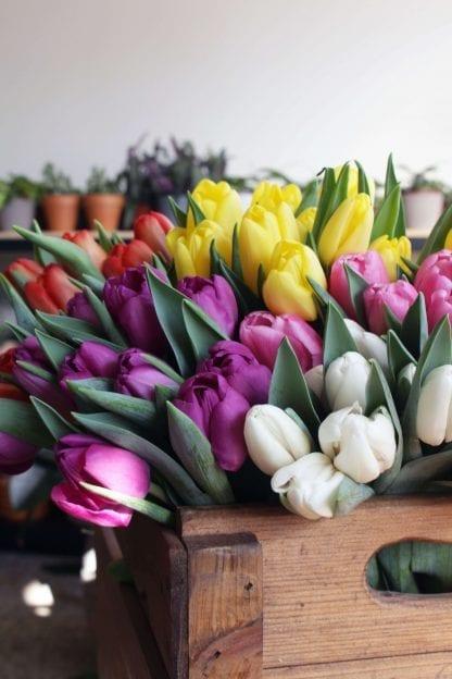 tulipes aux choix du fleuriste